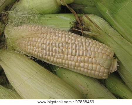pile of ears of corn with unwrapped one