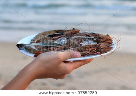 Plate Of Raw Langoustine On Ice With Sea View Background
