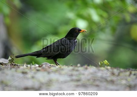 A Bird With An Insect In Its Beak