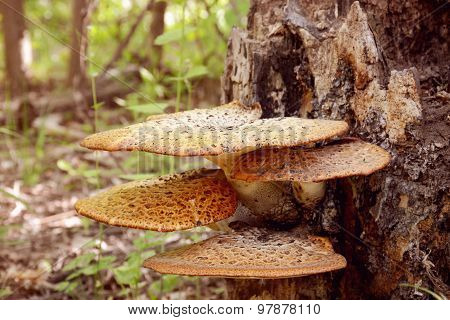 Fungus Growing On A Tree