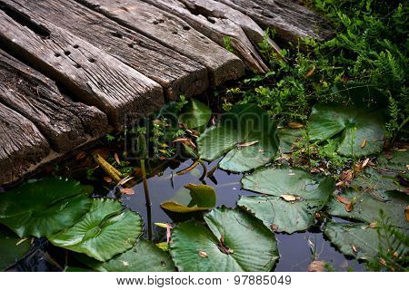 Close up of water lillies, plants in a pond, lake
