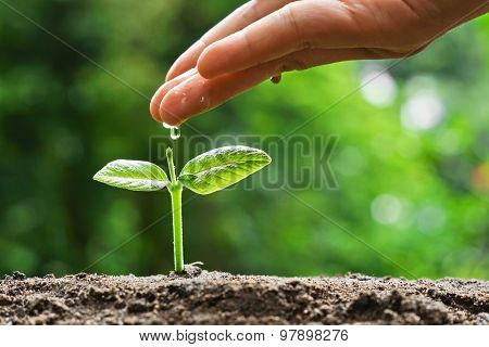 hand nurturing and watering a young plant / Love and protect nature concept / nurturing baby plant