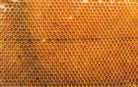 stock photo of honeycomb  - Honeycombs filled with honey closeup - JPG
