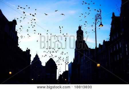 Birds flying over Main Square, Poland