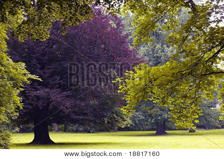 Beautiful trees in the park