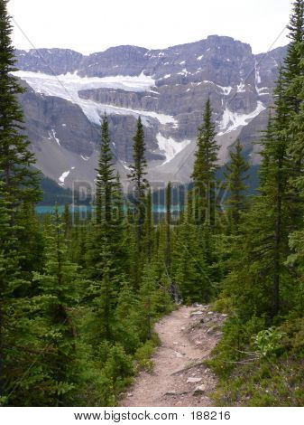 Crowfoot Glacier And Trail