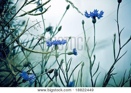 Fresh spring meadow closeup