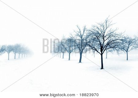 Winter orchard covered with snow