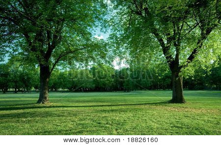 Afternoon park