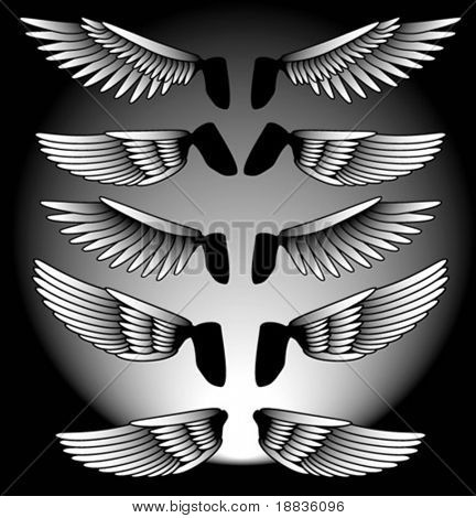 different wings on a black background