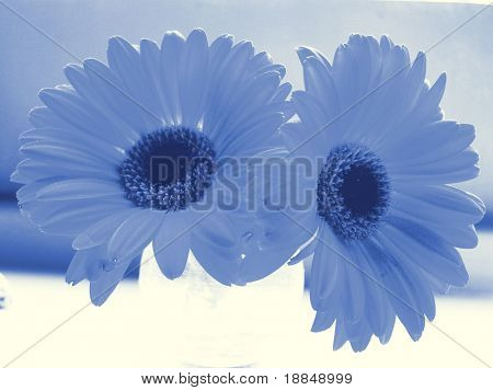 photographic reproduction cyanotype two daisies in a vase