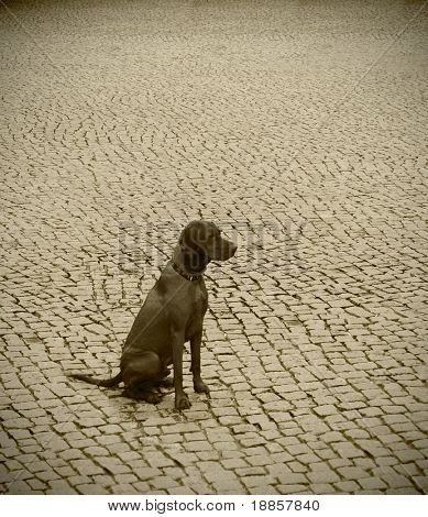 Lonely dog looking into the distance