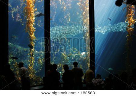 Undersea Wonder