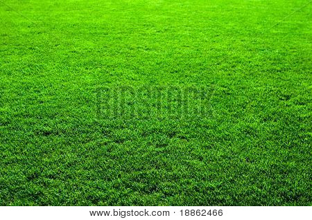 Nice Green grass texture with perspective