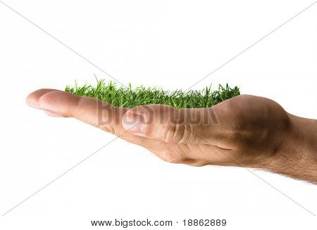 Green grass growing in a hand isolated on white