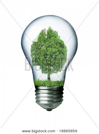 Tree in a light bulb isolated on white concept image