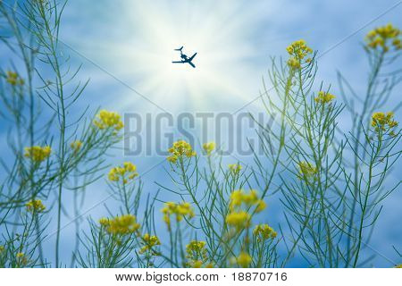 winter cress and the plane