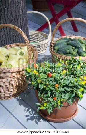 Different Vegetables In Baskets