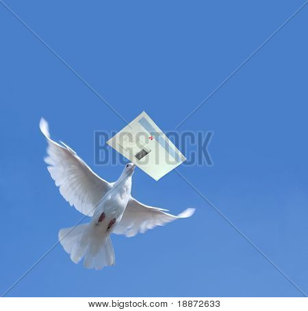 White Homing pigeon with letter