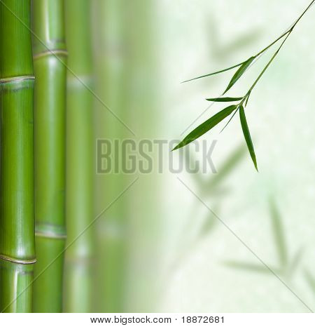 e8dc236e8436 Beautiful Bamboo Border. Bamboo a natural background poster. ID  18872681
