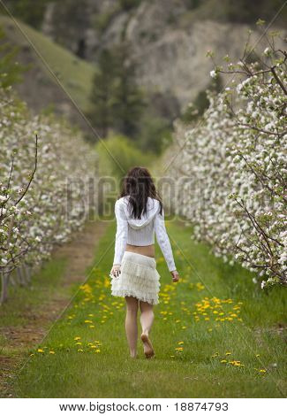 Outdoor rear view photo of young woman walking through orchard in bloom.