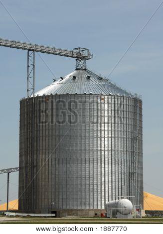 Grain Head