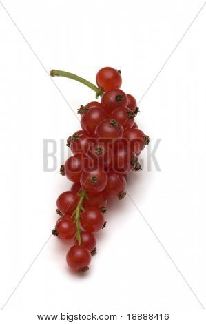 redcurrant on white background