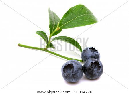 fresh bio bilberries on white background