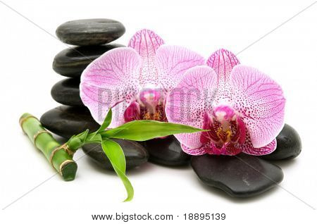 pink orchid, stack of stones on white background