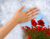 Hand removing Ice from a frozen window revealing field of flowers behind. Clipping path around the h