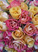 photograph of a bouquet with peachy yellow and pinkish red roses