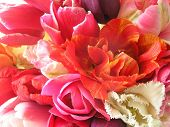 picture of close-up shot  - close up shot of a variety of tulips - JPG