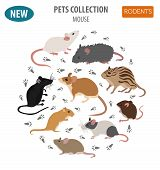 Pets_rodents_rat_3 poster