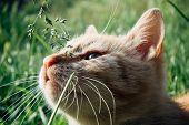 Close up cat portrait poster