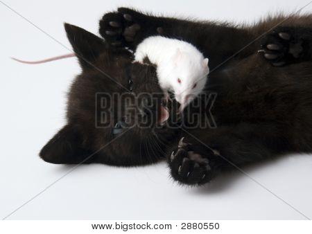 Gato preto & rato branco
