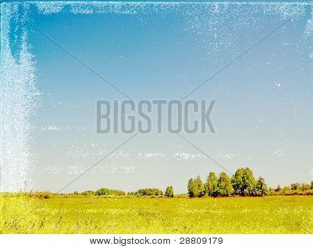 birch copse on grunge background