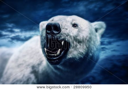 Angry polar bear with sharp teeth
