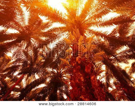 Palm trees with bush leaves
