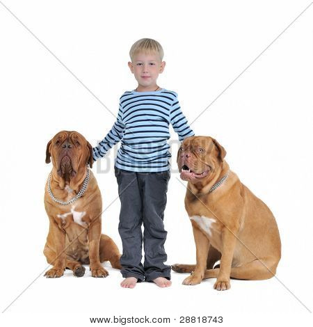Total safety concept - boy with dogs isolated