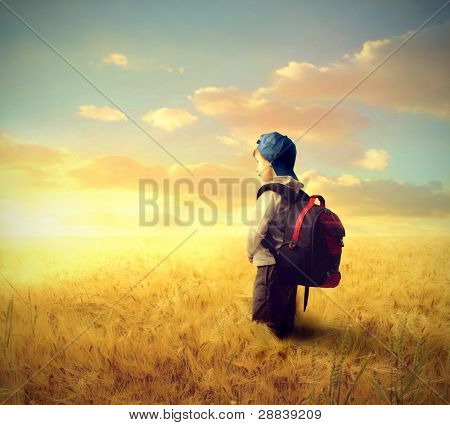 School boy on a wheat field