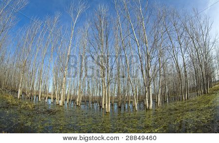 trees in swamp