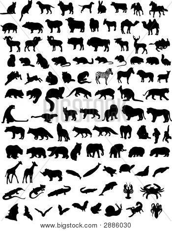 100 Animais