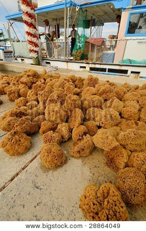 TARPON SPRINGS, FLORIDA - DECEMBER 26: Sponge harvest December 26, 2011 in Tarpon Springs, FL. Once considered dead, the sponge industry has made a comeback with a record harvest in 2007.