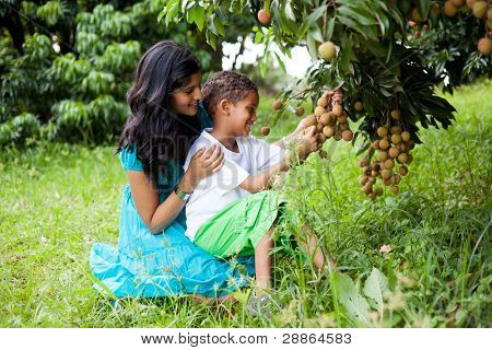 young happy mother and son picking litchis in litchi orchard