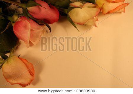 Beautiful Antique Rose Background