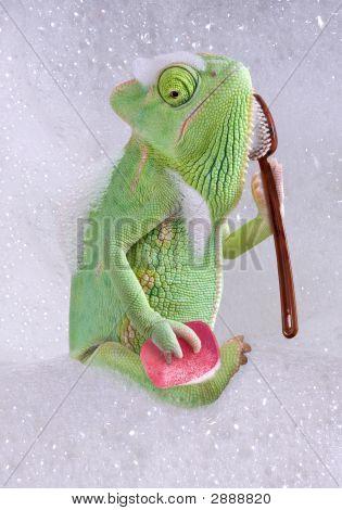 Chameleon Bath Time