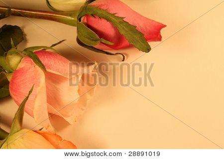 Rose Background Border