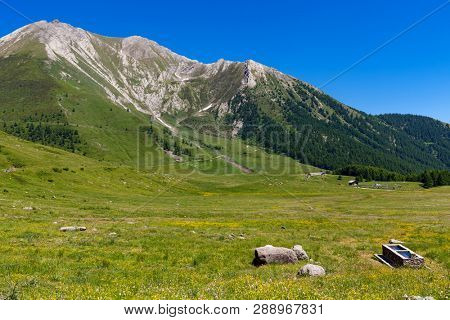Green alpine meadow and mountains