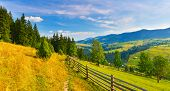 Countryside. Panoramic View Of Summer Countryside With Conifer Forest poster
