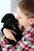stock photo of heeler  - Beautiful blond boy with a black puppy - JPG